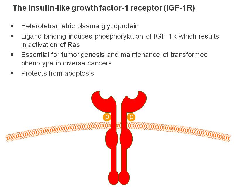 Insulin like growth factor